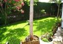 Villa Clovis,Miami Platja,Costa Dorada image-20